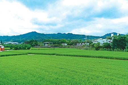 風情照片-蔥綠的稻田與後方聚興山與林牛山連稜。