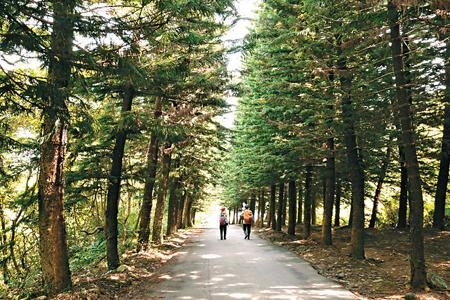 風情照片-登山途中的綠色公路。