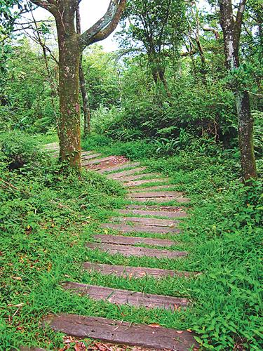 風情照片-枕木步道規劃良好。