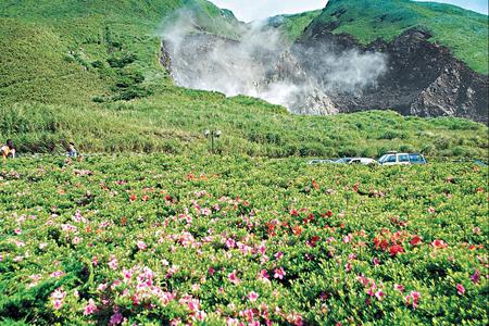 風情照片-小油坑杜鵑花開時。圖╱劉川裕