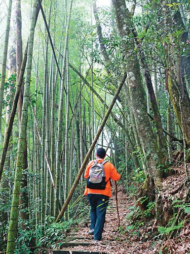風情照片-登頂前步道。