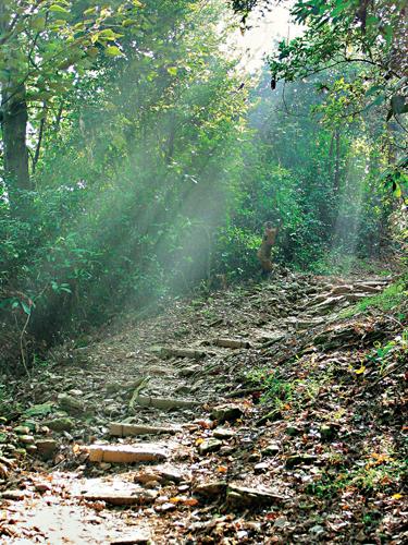 風情照片-棚集山步道。圖/胡秀治
