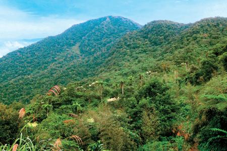 風情照片-山巒青翠的初音山。圖/崔祖錫
