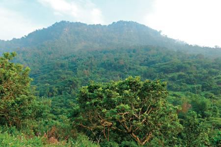 風情照片-崁頭山是台南市熱門的登山路線。圖/張賀融