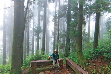 風情照片-迷霧森林。圖/陳素恩