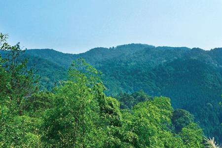 風情照片-金柑樹山寬稜坡緩,林相豐富。