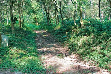 風情照片-茶子步道登初音山登山口。
