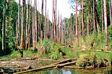 風情照片-忘憂森林美如畫境。圖/陳素恩