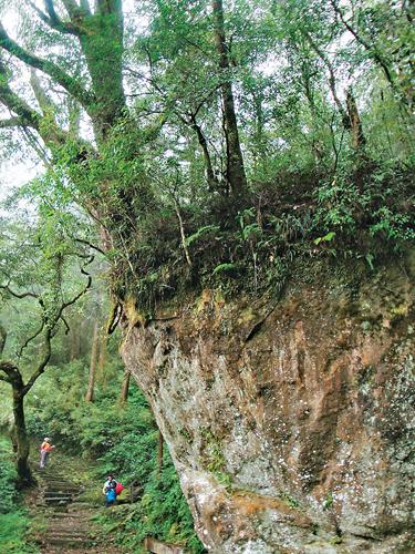 風情照片-樹石盟是此地有名的景點。