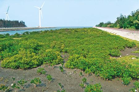 風情照片-動植物生態豐富的高美濕地。